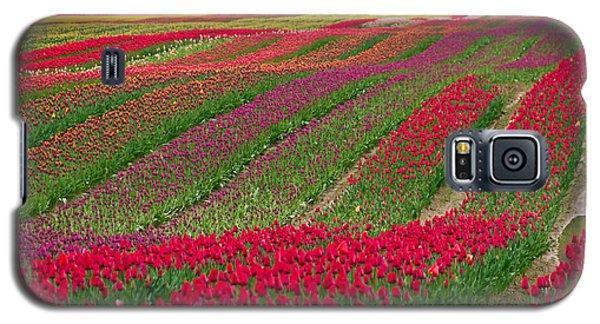 Monet Alive Galaxy S5 Case by Eti Reid