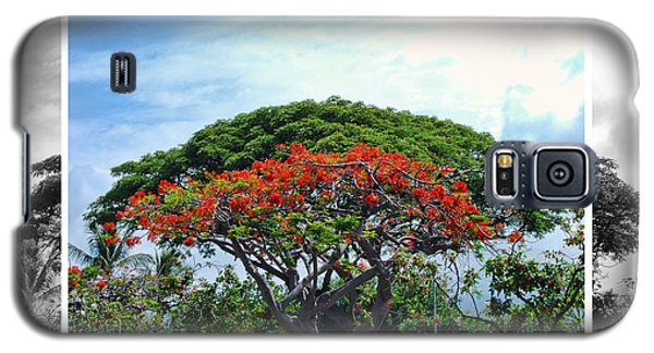 Monkey Pod Trees - Kona Hawaii Galaxy S5 Case
