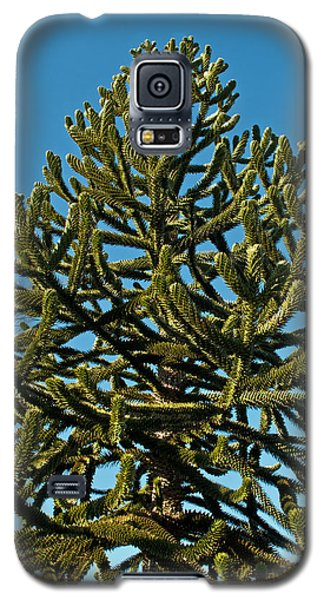 Monkey Puzzle Tree E Galaxy S5 Case by Tikvah's Hope