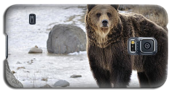 Montana Grizzly  Galaxy S5 Case