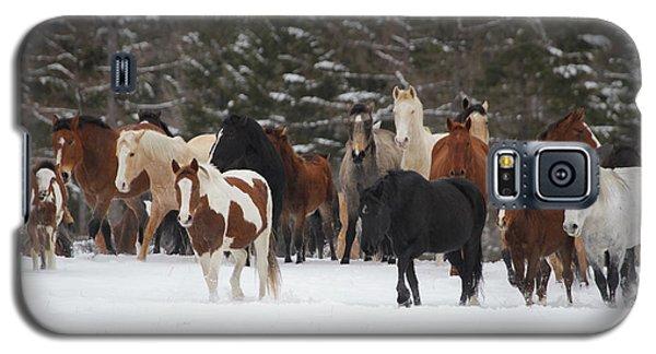 Montana Herd Galaxy S5 Case