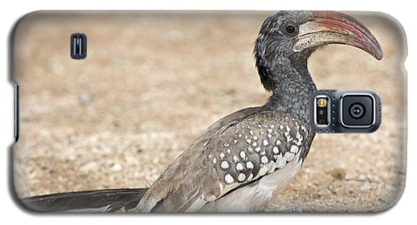 Monteiro's Hornbill Foragin Galaxy S5 Case