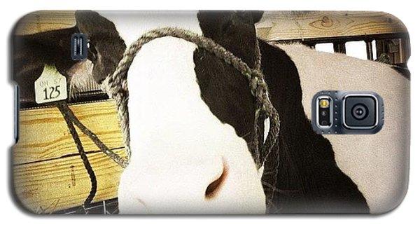 Ohio Galaxy S5 Case - Moo Cow by Natasha Marco