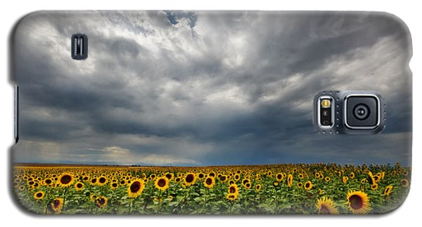 Galaxy S5 Case featuring the photograph Moody Skies Over The Sunflower Fields by Ronda Kimbrow