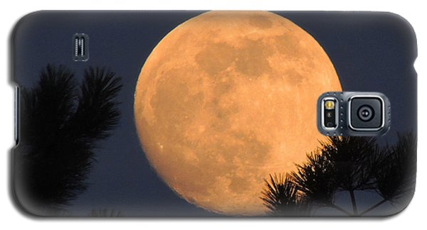 Galaxy S5 Case featuring the photograph Moon Pines by Charlotte Schafer