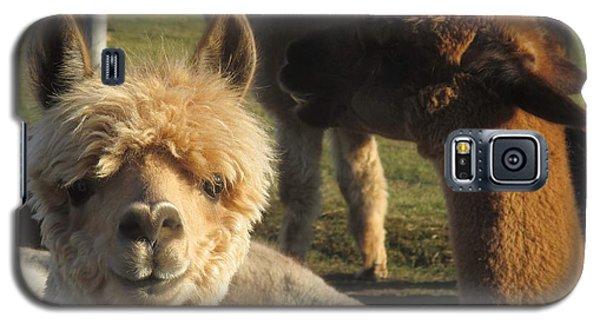 Moonacre Alpacas 2 Galaxy S5 Case