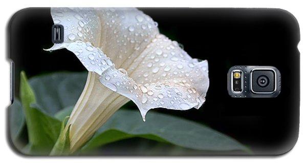Moonflower - Rain Drops Galaxy S5 Case by Nikolyn McDonald