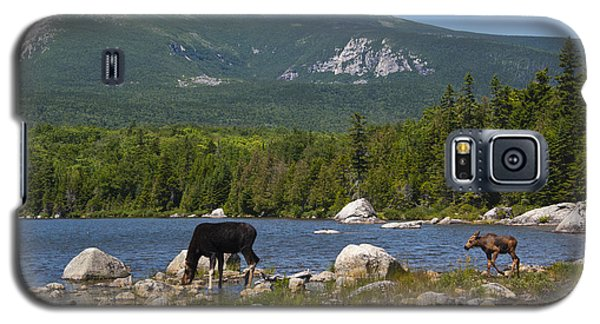 Moose Baxter State Park Maine Galaxy S5 Case
