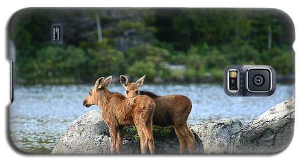 Moose Calves In Maine Galaxy S5 Case by Jeannette Hunt