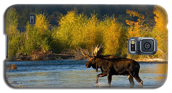Galaxy S5 Case featuring the photograph Moose Crossing by Aaron Whittemore