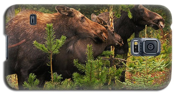 Moose Family At The Shredded Pine Galaxy S5 Case