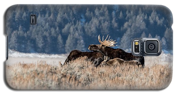 Galaxy S5 Case featuring the photograph Moose Family Pride by Yeates Photography
