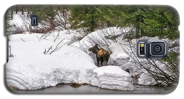 Galaxy S5 Case featuring the photograph Moose In Alaska by Amanda Smith