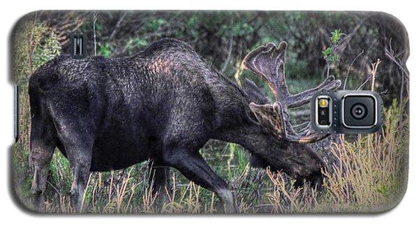 Moose In The Meadow Galaxy S5 Case