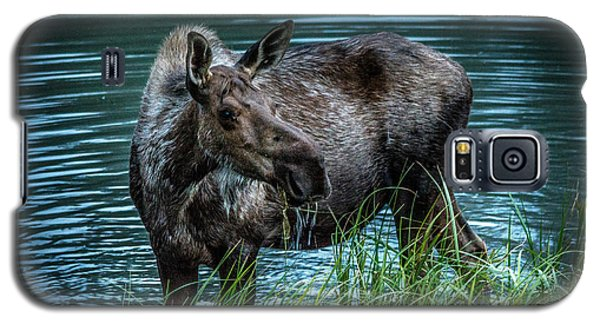 Moose In The Water Galaxy S5 Case