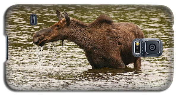 Moose In The Wilderness Galaxy S5 Case