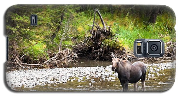 Moose In Yellowstone National Park   Galaxy S5 Case