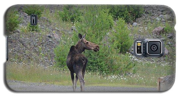 Moose Galaxy S5 Case by James Petersen