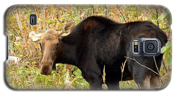 Galaxy S5 Case featuring the photograph Moose by James Peterson
