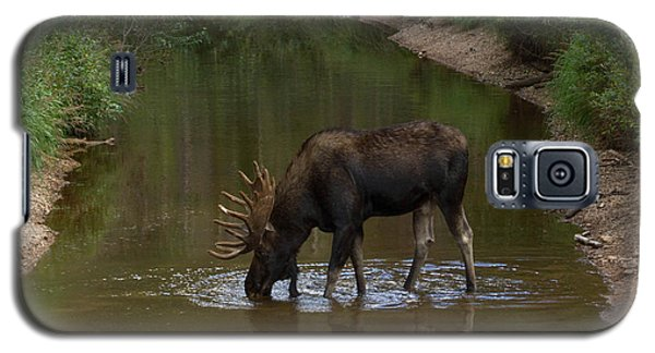Moose Sipping Water Galaxy S5 Case