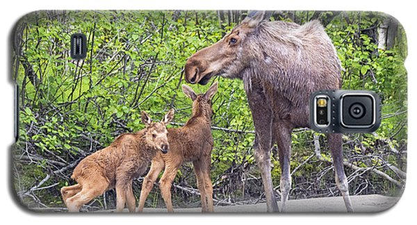 Galaxy S5 Case featuring the photograph Moose With Twins by Stephen  Johnson