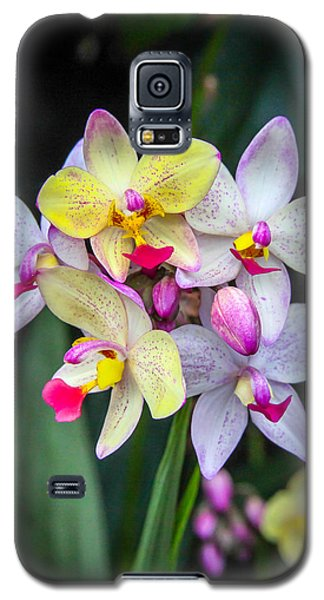 Morning At The National Arboretum Galaxy S5 Case by Ross Henton
