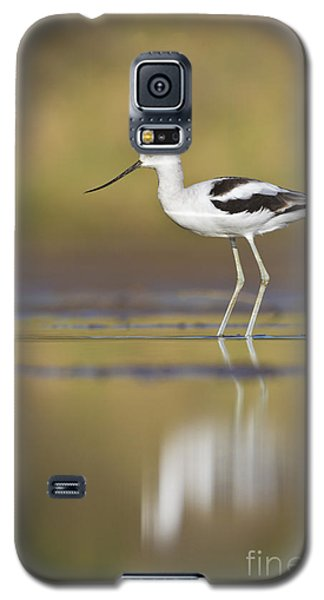 Galaxy S5 Case featuring the photograph Morning Avocet by Bryan Keil