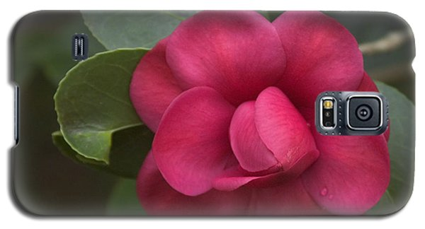 Galaxy S5 Case featuring the photograph Morning Camellia by Penny Lisowski