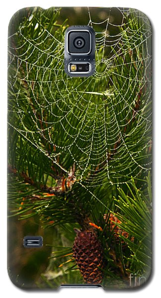 Morning Dew On Cobweb Galaxy S5 Case