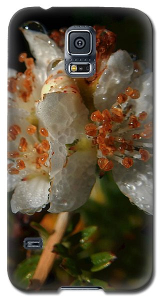 Morning Dew Galaxy S5 Case by Pamela Walton