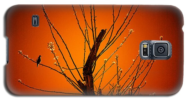 Morning Dove Sunrise Galaxy S5 Case