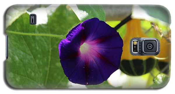 Galaxy S5 Case featuring the photograph Morning Glory by John Mathews