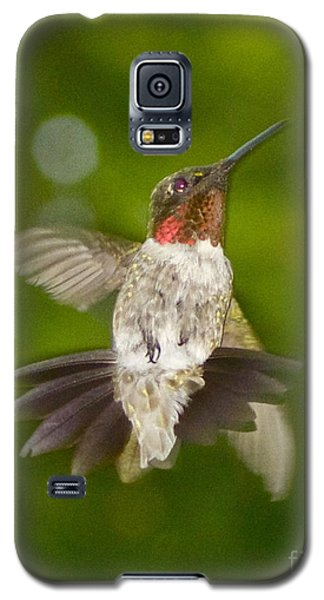 Galaxy S5 Case featuring the photograph Morning Greeter by Alice Mainville