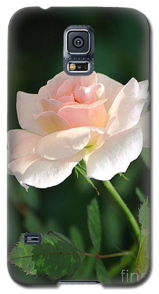Morning Has Broken Galaxy S5 Case by Living Color Photography Lorraine Lynch