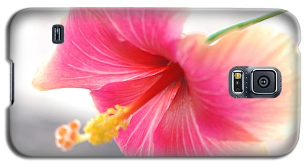 Morning Hibiscus In Gentle Light - Square Macro Galaxy S5 Case
