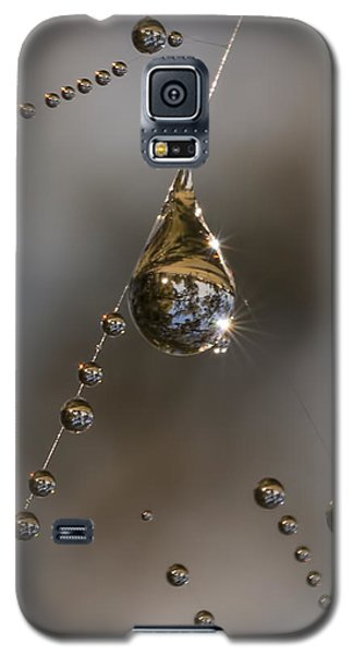 Morning Spider Web Dew Galaxy S5 Case by David Lester
