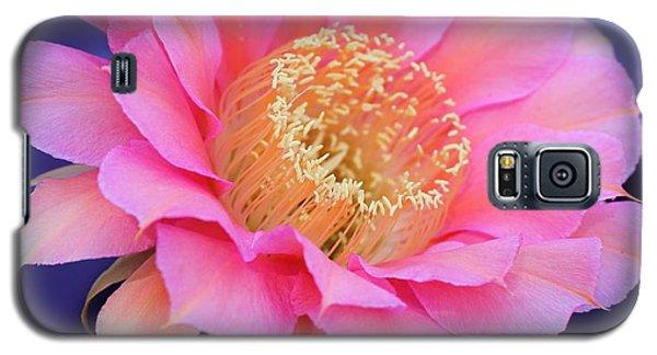 Morning Surprise 2 Galaxy S5 Case