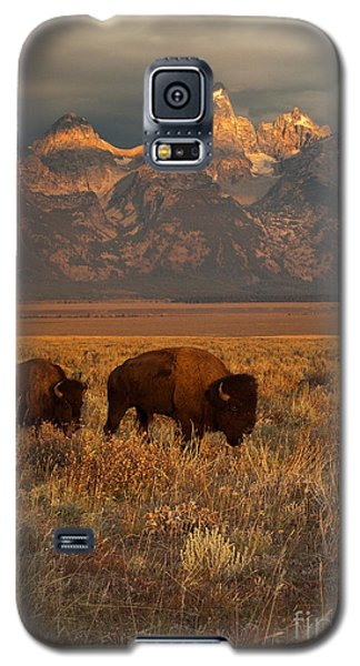 Bison Galaxy S5 Case - Morning Travels In Grand Teton by Sandra Bronstein