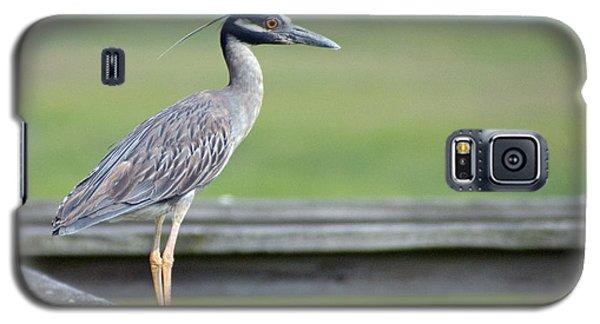 Morning Treasure Night Heron Galaxy S5 Case