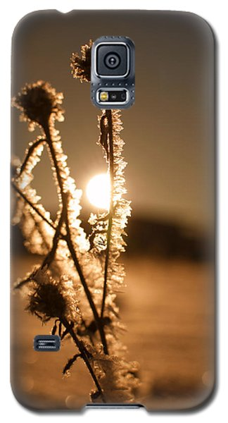 Galaxy S5 Case featuring the photograph Morning Walk by Miguel Winterpacht