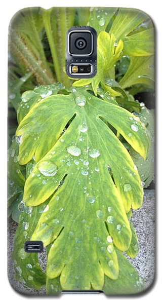 Galaxy S5 Case featuring the photograph Mornings Dew by Margie Amberge