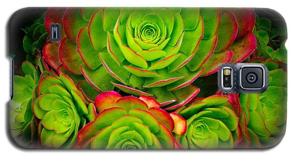 Morro Bay Echeveria Galaxy S5 Case by Terry Garvin