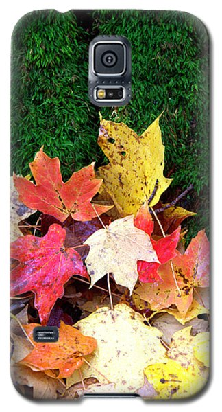 Galaxy S5 Case featuring the photograph Moss And Leaves by Jim McCain