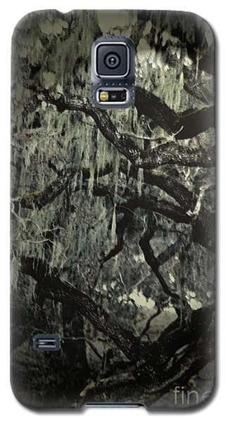 Moss Covered Oak Galaxy S5 Case by Gary Brandes