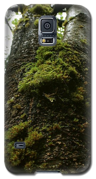 Galaxy S5 Case featuring the photograph Moss Covered Tree by Amanda Holmes Tzafrir