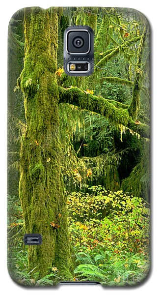 Galaxy S5 Case featuring the photograph Moss Draped Big Leaf Maple California by Dave Welling
