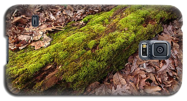 Moss On Pine Galaxy S5 Case