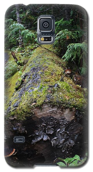 Galaxy S5 Case featuring the photograph Mossy Tree Trunk by Amanda Holmes Tzafrir