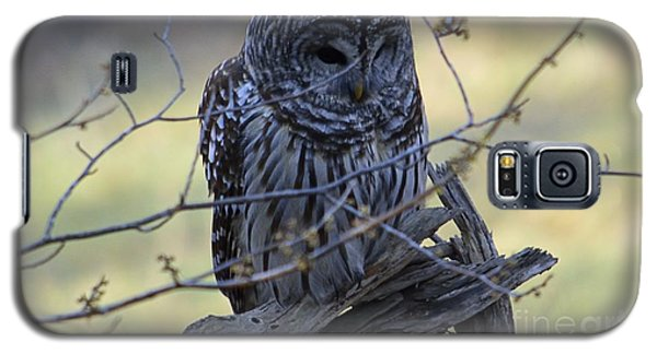 Galaxy S5 Case featuring the photograph Mostly Awake by Randy Bodkins