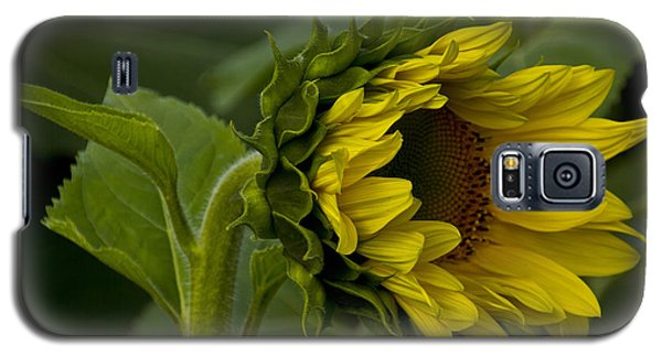 Mostly Open Sunflower Galaxy S5 Case